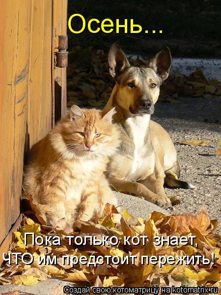 Котоматрица: Осень... Пока только кот знает, ЧТО им предстоит пережить!