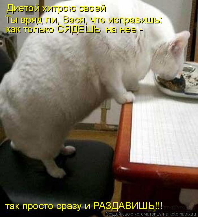 Котоматрица: Диетой хитрою своей  Ты вряд ли, Вася, что исправишь: как только СЯДЕШЬ  на нее -  так просто сразу и РАЗДАВИШЬ!!!