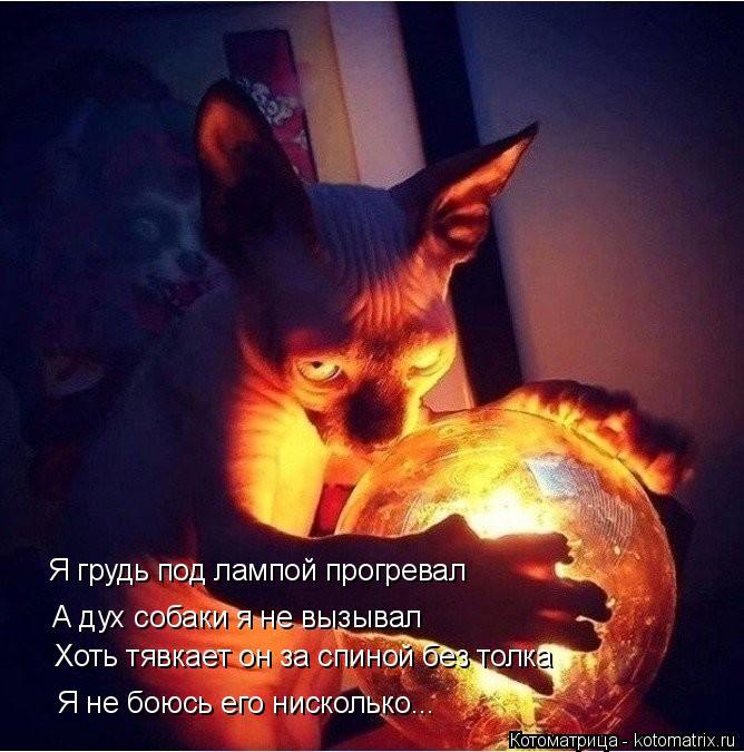 Котоматрица: Я грудь под лампой прогревал  А дух собаки я не вызывал Хоть тявкает он за спиной без толка Я не боюсь его нисколько...