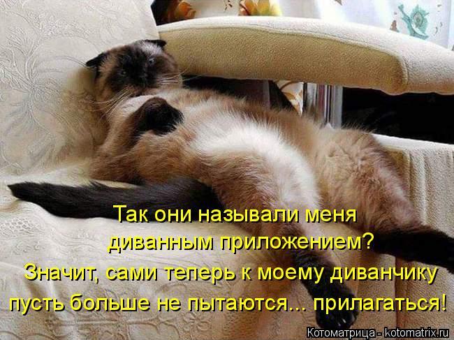 Котоматрица: Так они называли меня  диванным приложением? Значит, сами теперь к моему диванчику  пусть больше не пытаются... прилагаться!