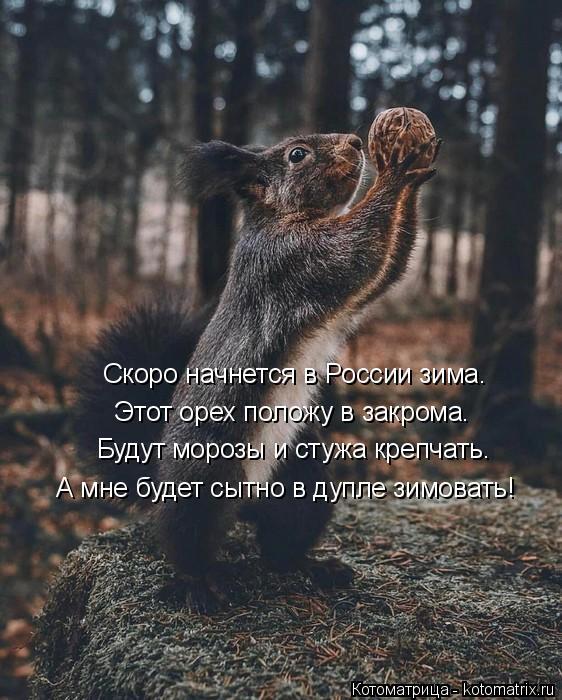 Котоматрица: Скоро начнется в России зима. Этот орех положу в закрома. Будут морозы и стужа крепчать. А мне будет сытно в дупле зимовать!