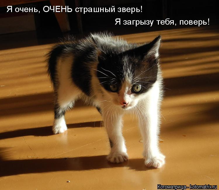Котоматрица: Я очень, ОЧЕНЬ страшный зверь! Я загрызу тебя, поверь!