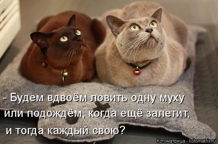Котоматрица: - Будем вдвоём ловить одну муху  или подождём, когда ещё залетит,  и тогда каждый свою?