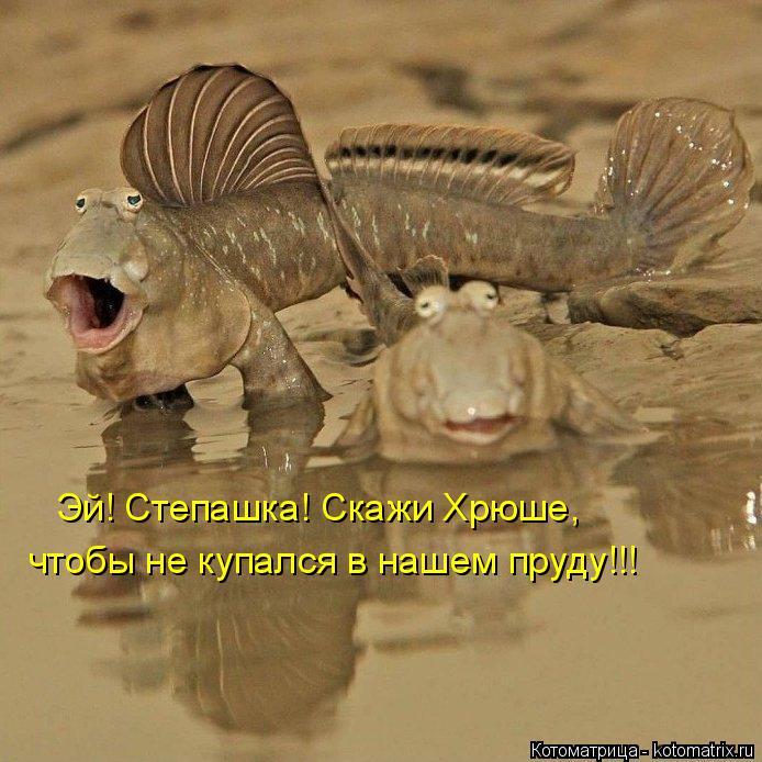 Котоматрица: Эй! Степашка! Скажи Хрюше, чтобы не купался в нашем пруду!!!