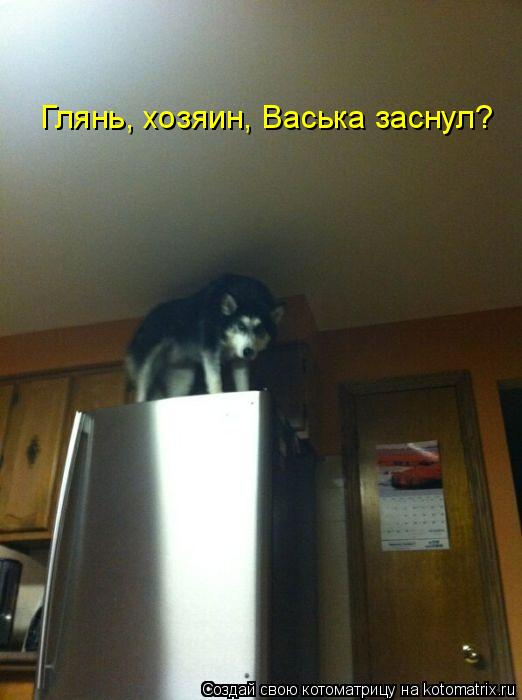 Котоматрица: Глянь, хозяин, Васька заснул?