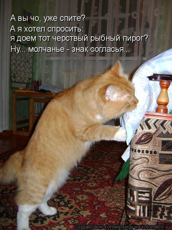 Котоматрица: А вы чо, уже спите? А я хотел спросить:  я доем тот черствый рыбный пирог? Ну... молчанье - знак согласья...