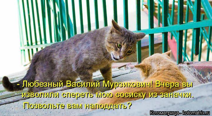 Котоматрица: - Любезный Василий Мурзикович! Вчера вы изволили спереть мою сосиску из заначки. Позвольте вам наподдать?