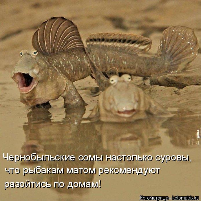Котоматрица: Чернобыльские сомы настолько суровы, что рыбакам матом рекомендуют разойтись по домам!