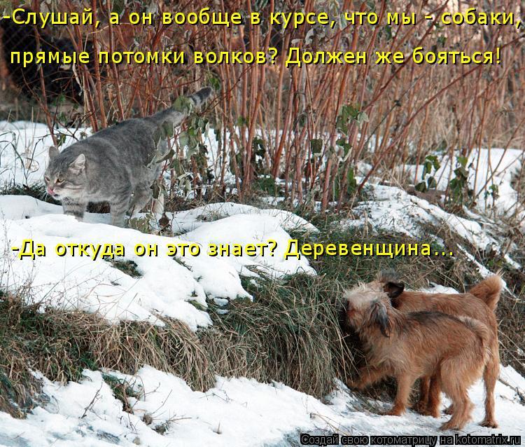 Котоматрица: -Слушай, а он вообще в курсе, что мы - собаки,  прямые потомки волков? Должен же бояться! -Да откуда он это знает? Деревенщина...
