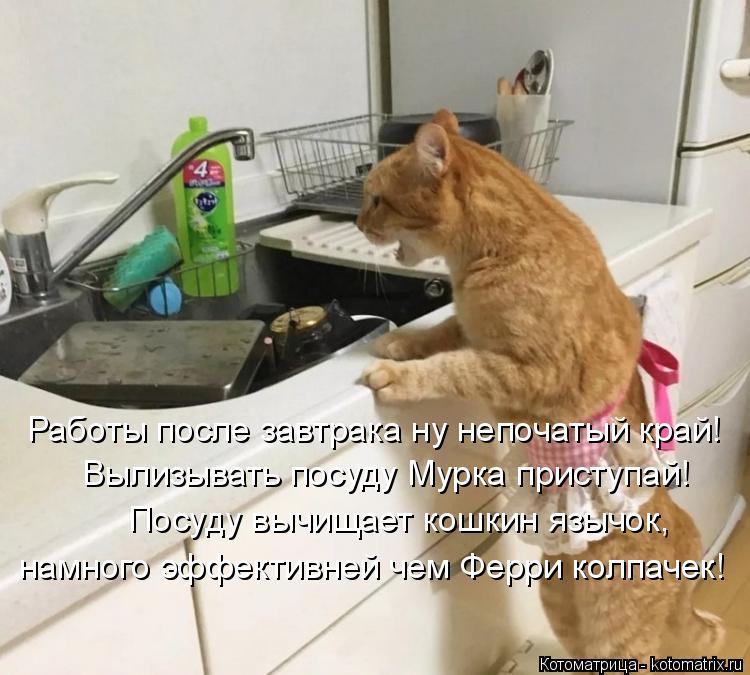 Котоматрица: Вылизывать посуду Мурка приступай! Посуду вычищает кошкин язычок, намного эффективней чем Ферри колпачек! Работы после завтрака ну непоча?