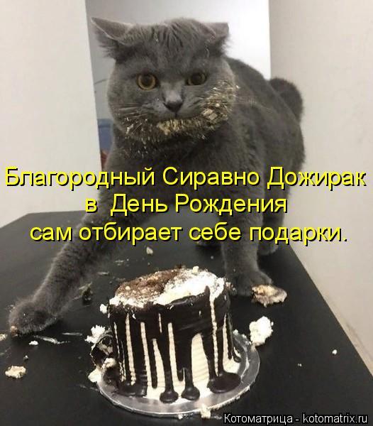 Котоматрица: Благородный Сиравно Дожирак в  День Рождения  сам отбирает себе подарки.