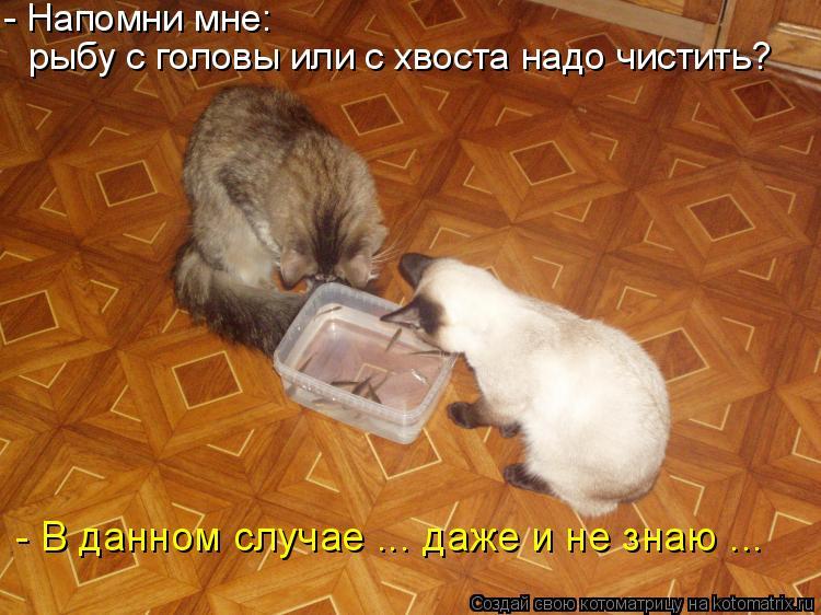 Котоматрица: - Напомни мне: рыбу с головы или с хвоста надо чистить? - В данном случае ... даже и не знаю ...