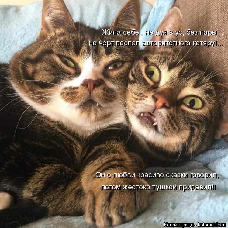 Котоматрица: Жила себе , не дуя в ус, без пары... но черт послал авторитетного котяру!... Он о любви красиво сказки говорил, потом жестоко тушкой придавил!!