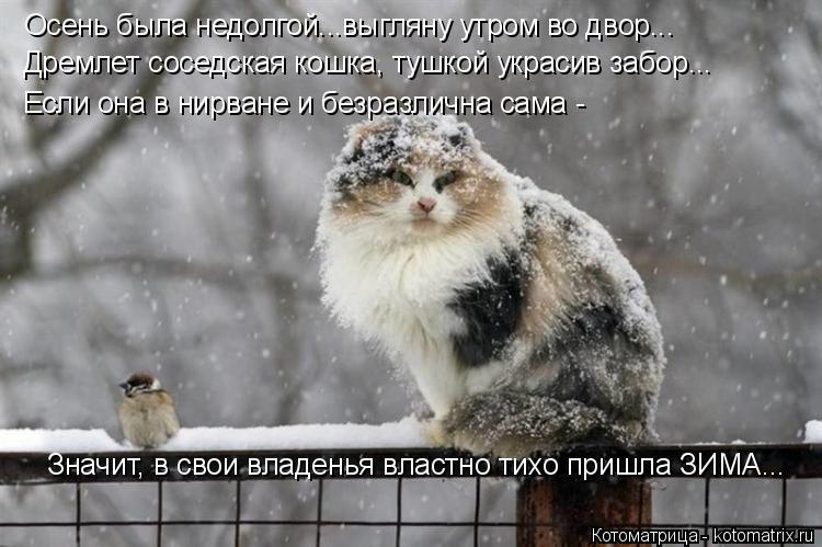 Котоматрица: Осень была недолгой...выгляну утром во двор... Дремлет соседская кошка, тушкой украсив забор... Если она в нирване и безразлична сама - Значит,