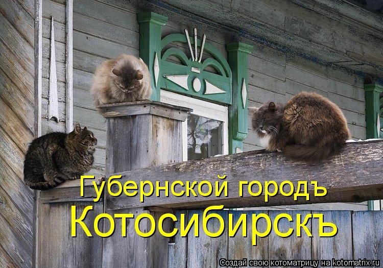 Котоматрица: Губернской городъ  Котосибирскъ