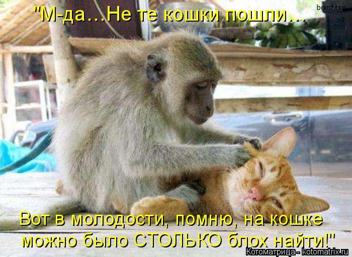"""Котоматрица: Вот в молодости, помню, на кошке  можно было СТОЛЬКО блох найти!"""" """"М-да…Не те кошки пошли…"""