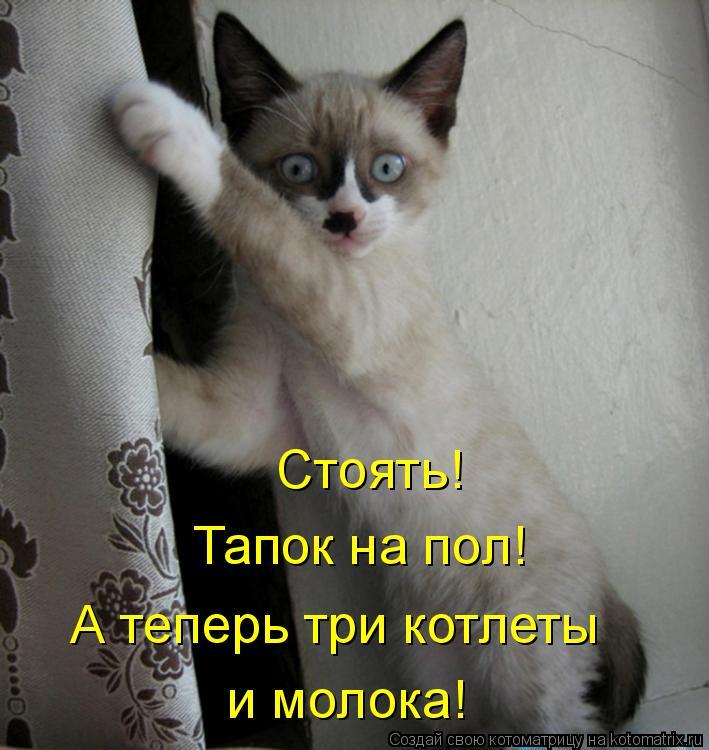 Котоматрица: Стоять! Тапок на пол! А теперь три котлеты и молока!