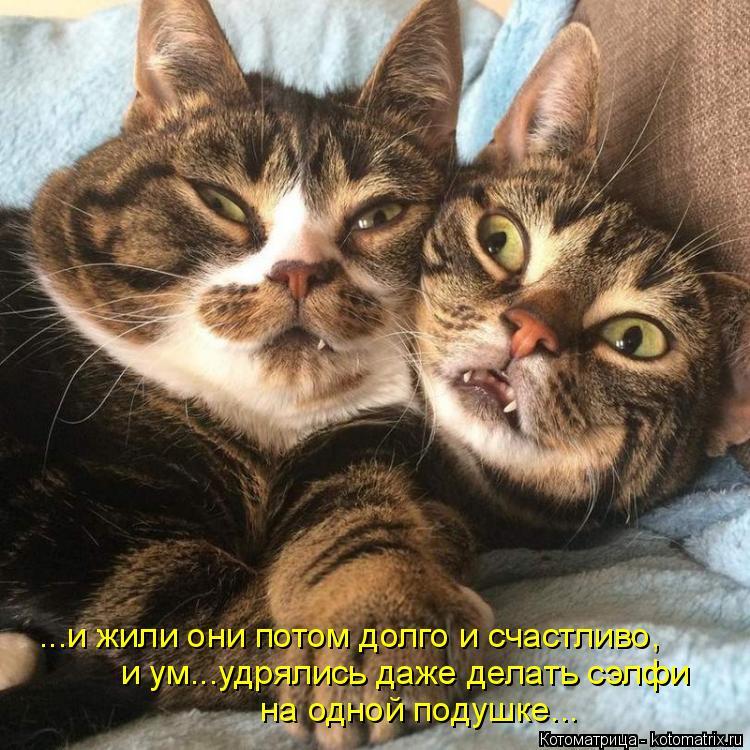 Котоматрица: ...и жили они потом долго и счастливо, и ум...удрялись даже делать сэлфи на одной подушке...