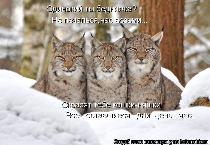 Котоматрица: Одинокий ты,бедняжка? Не печалься,нас возьми... Скрасят тебе кошки-няшки  Все...оставшиеся...дни..день...час..