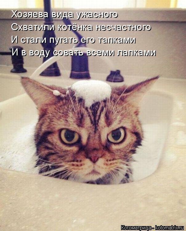 Котоматрица: Хозяева вида ужасного Схватили котёнка несчастного И стали пугать его тапками И в воду совать всеми лапками