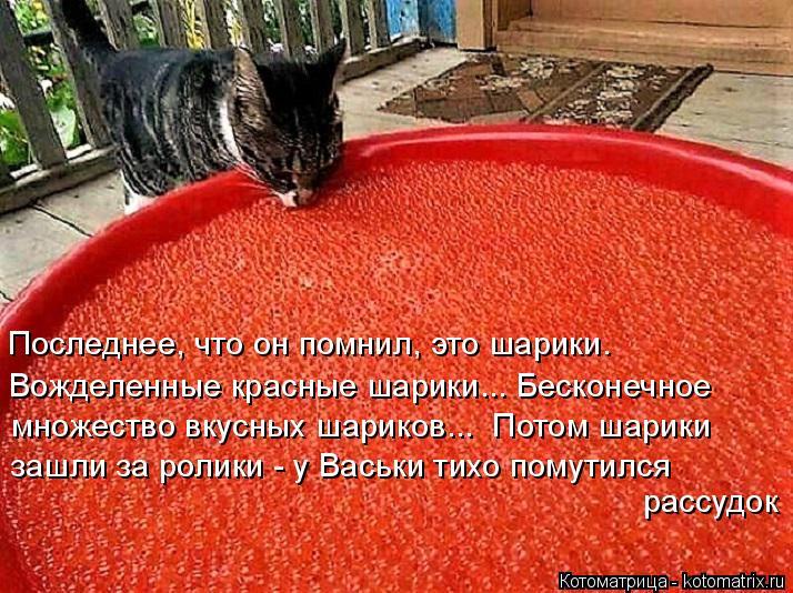 Котоматрица: Последнее, что он помнил, это шарики. Вожделенные красные шарики... Бесконечное множество вкусных шариков...  Потом шарики зашли за ролики - у