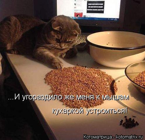 Котоматрица: ...И угораздило же меня к мышам  кухаркой устроиться!