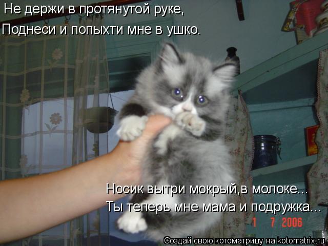 Котоматрица: Не держи в протянутой руке, Поднеси и попыхти мне в ушко. Ты теперь мне мама и подружка... Носик вытри мокрый,в молоке...