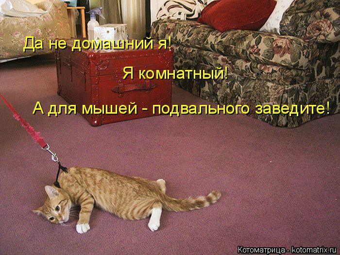 Котоматрица: Да не домашний я! Я комнатный! А для мышей - подвального заведите!