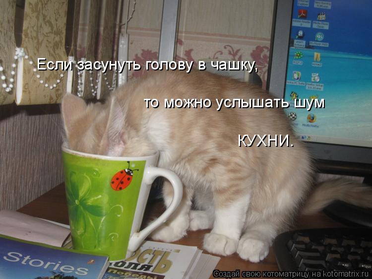 Котоматрица: Если засунуть голову в чашку,  то можно услышать шум КУХНИ.