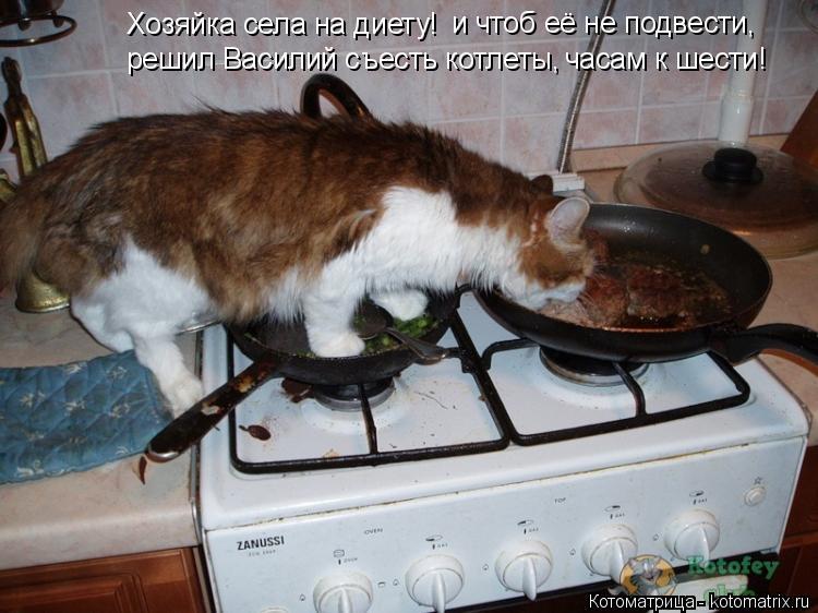 Котоматрица: Хозяйка села на диету! и чтоб её не подвести, решил Василий съесть котлеты, часам к шести!