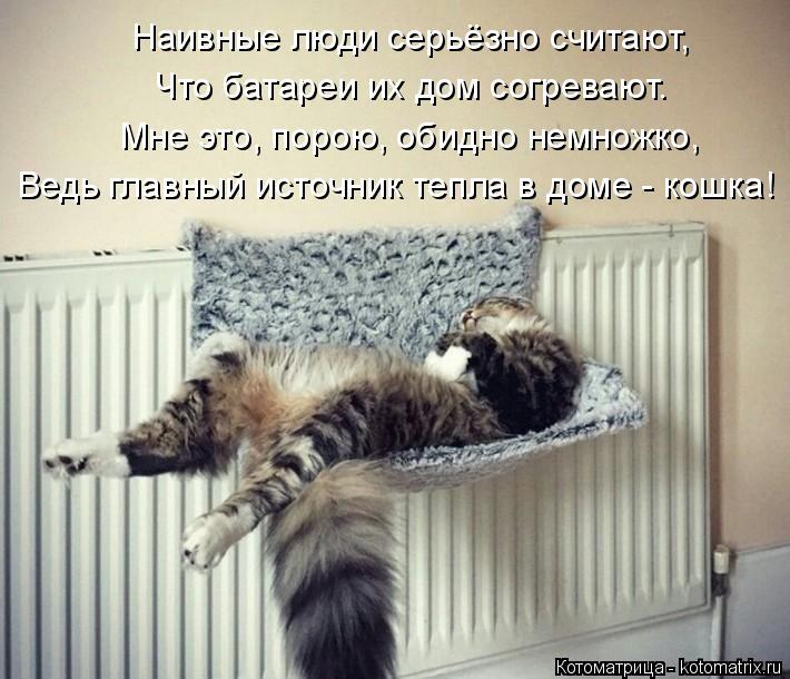 Котоматрица: Наивные люди серьёзно считают, Что батареи их дом согревают. Мне это, порою, обидно немножко, Ведь главный источник тепла в доме - кошка!