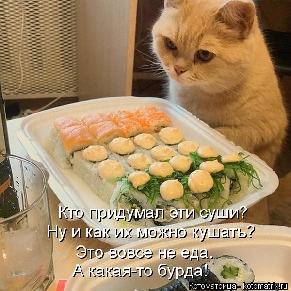 Котоматрица: Кто придумал эти суши? Ну и как их можно кушать? Ну и как их можно кушать? Это вовсе не еда. А какая-то бурда!