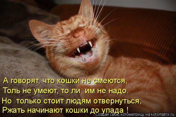 Котоматрица: А говорят, что кошки не смеются, Толь не умеют, то ли  им не надо. Но только стоит людям отвернуться, Ржать начинают кошки до упада !