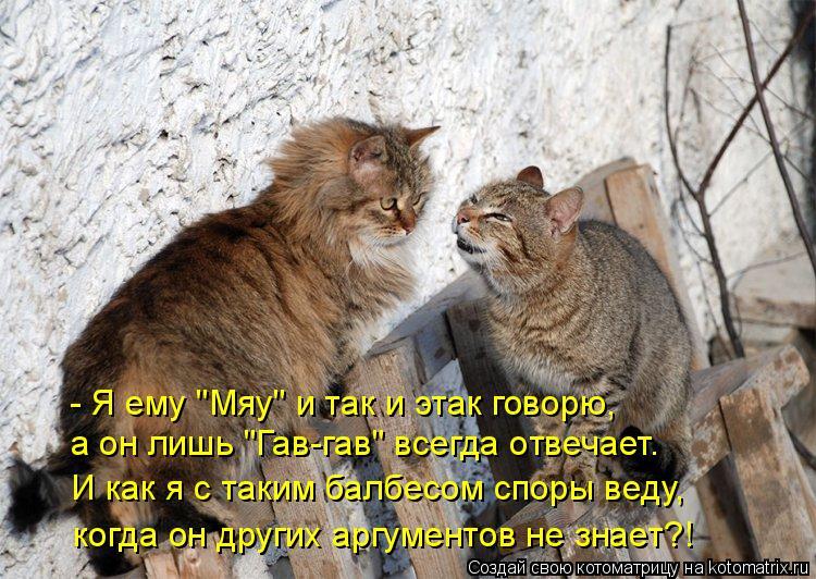 """Котоматрица: - Я ему """"Мяу"""" и так и этак говорю, а он лишь """"Гав-гав"""" всегда отвечает. И как я с таким балбесом споры веду, когда он других аргументов не знает?!"""