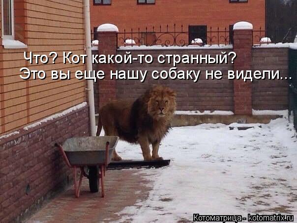 Котоматрица: Что? Кот какой-то странный? Это вы еще нашу собаку не видели...