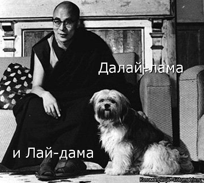 Котоматрица: Далай-лама и Лай-дама