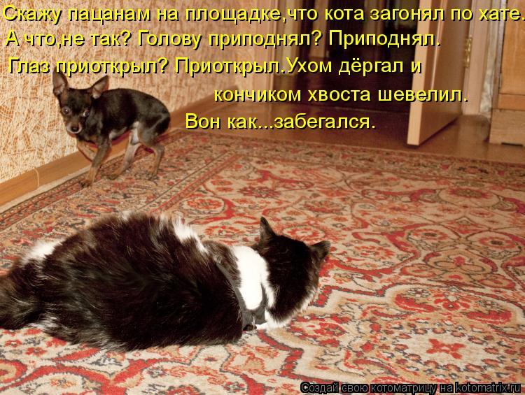 Котоматрица: Скажу пацанам на площадке,что кота загонял по хате. А что,не так? Голову приподнял? Приподнял. Глаз приоткрыл? Приоткрыл.Ухом дёргал и кончик