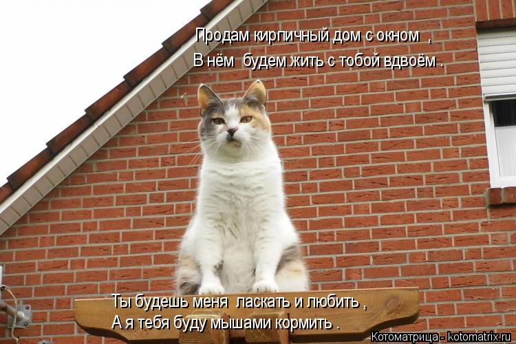Котоматрица: Продам кирпичный дом с окном  , В нём  будем жить с тобой вдвоём . Ты будешь меня  ласкать и любить , А я тебя буду мышами кормить .