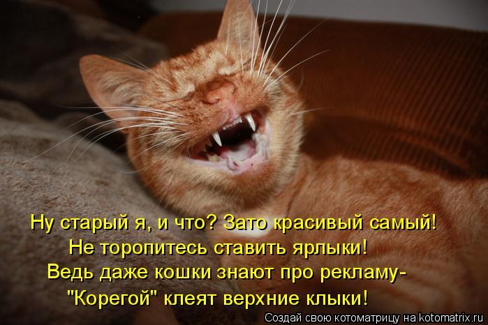 """Котоматрица: Не торопитесь ставить ярлыки! Ведь даже кошки знают про рекламу- """"Корегой"""" клеят верхние клыки! Ну старый я, и что? Зато красивый самый!"""