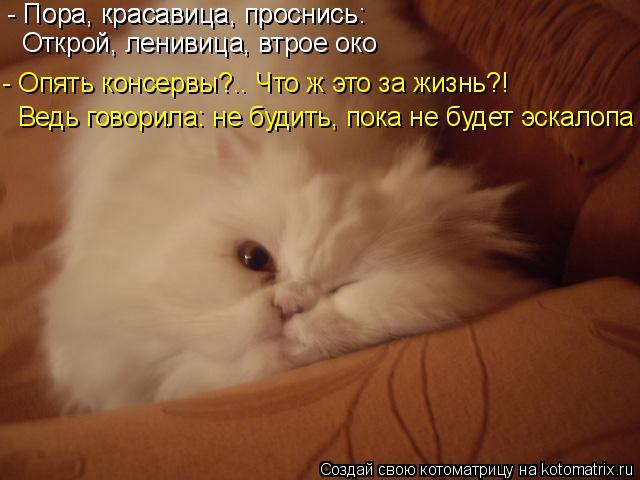 Котоматрица: - Пора, красавица, проснись: - Пора, красавица, проснись: Открой, ленивица, втрое око  - Опять консервы?.. Что ж это за жизнь?! Ведь говорила: не бу
