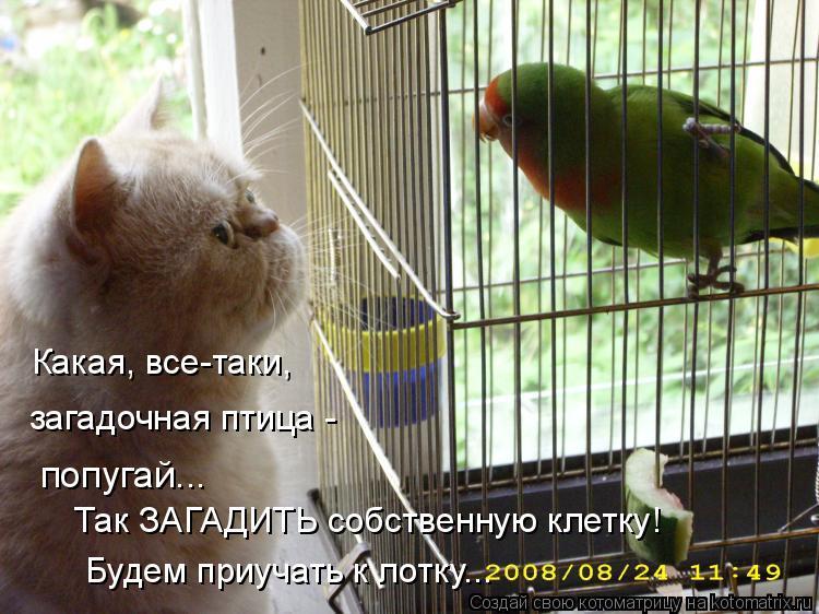 Котоматрица: Какая, все-таки, загадочная птица -  попугай... Так ЗАГАДИТЬ собственную клетку! Будем приучать к лотку...
