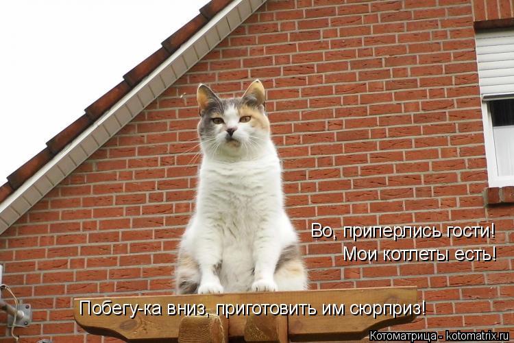 Котоматрица: Во, приперлись гости! Мои котлеты есть! Побегу-ка вниз, приготовить им сюрприз!