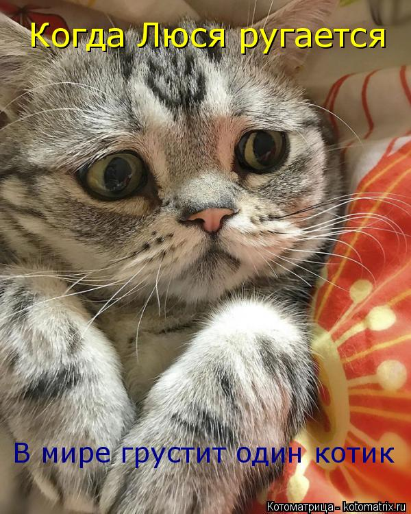 Котоматрица: Когда Люся ругается В мире грустит один котик