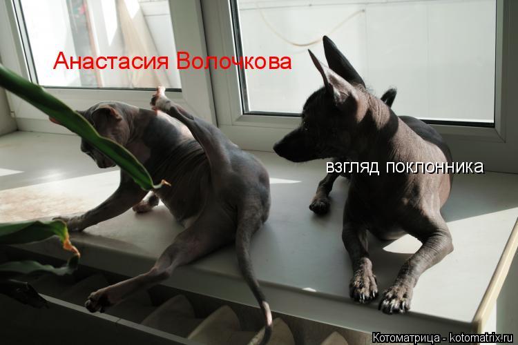 Котоматрица: Анастасия Волочкова взгляд поклонника