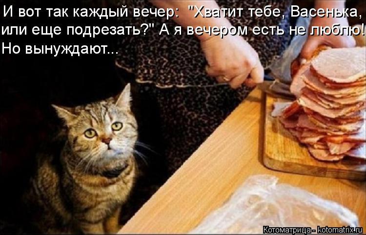 """Котоматрица: И вот так каждый вечер:  """"Хватит тебе, Васенька, или еще подрезать?"""" А я вечером есть не люблю! Но вынуждают..."""