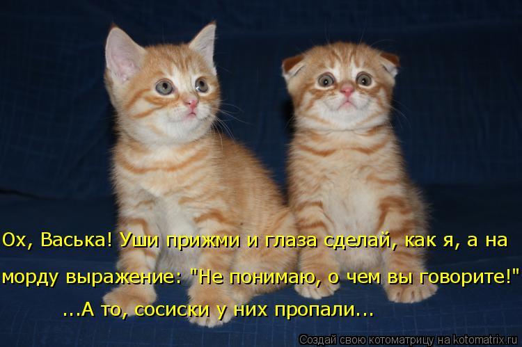 """Котоматрица: Ох, Васька! Уши прижми и глаза сделай, как я, а на морду выражение: """"Не понимаю, о чем вы говорите!"""". ...А то, сосиски у них пропали..."""