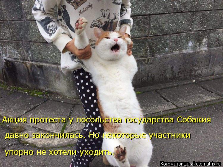 Котоматрица: Акция протеста у посольства государства Собакия упорно не хотели уходить. давно закончилась. Но некоторые участники