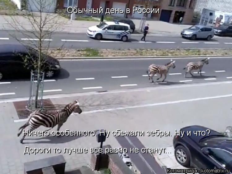 Котоматрица: Обычный день в России Ничего особенного. Ну сбежали зебры.  Ничего особенного. Ну сбежали зебры. Ну и что?  Дороги то лучше все равно не стану?
