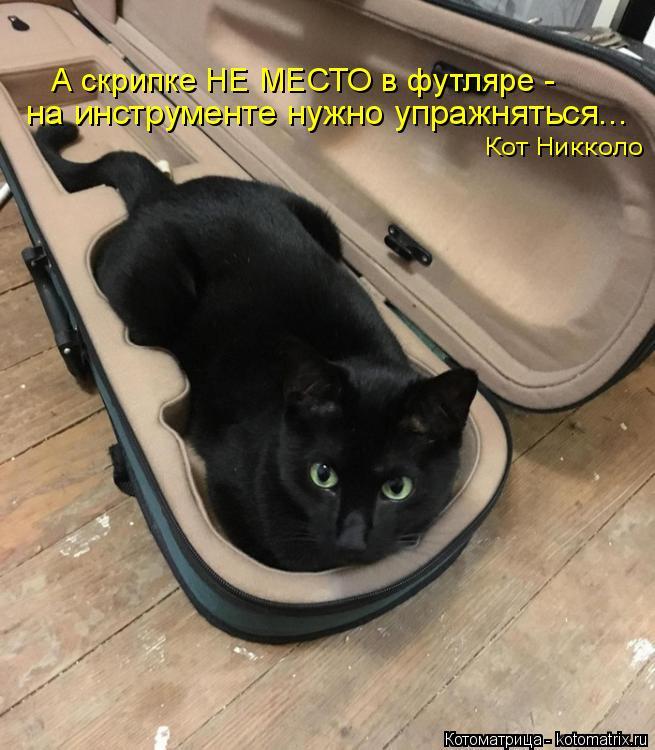 Котоматрица: А скрипке НЕ МЕСТО в футляре -  на инструменте нужно упражняться...  Кот Никколо