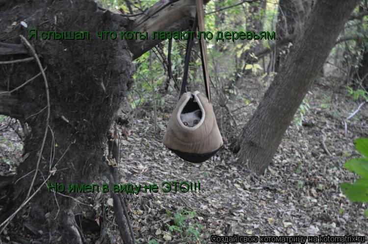 Котоматрица: Я слышал, что коты лазают по деревьям. Но имел в виду не ЭТО!!!.